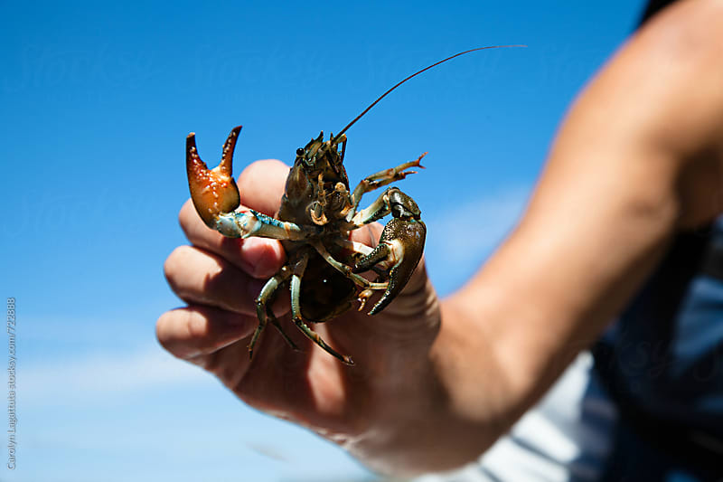 Man holding a crawdad that's a pretty blue-green color by Carolyn Lagattuta for Stocksy United