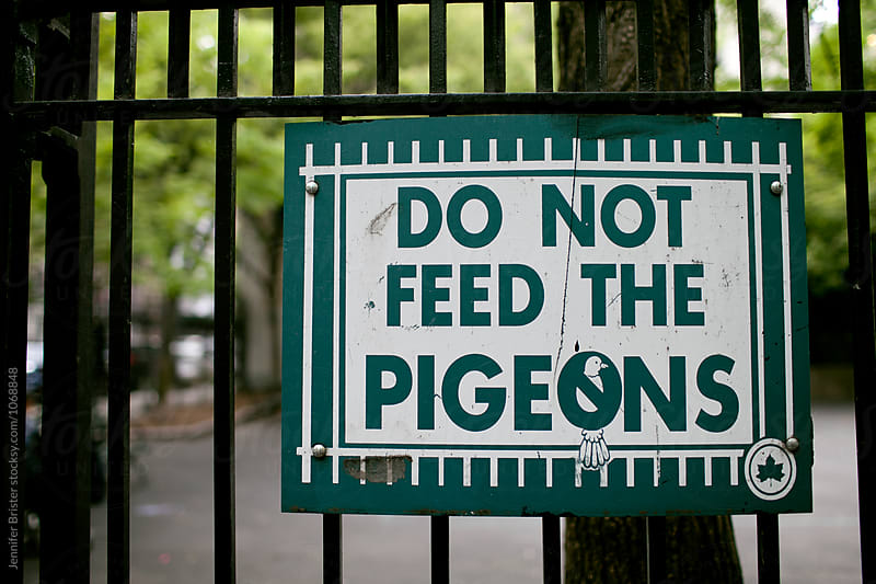 Do not feed the pigeons sign  by Jennifer Brister for Stocksy United