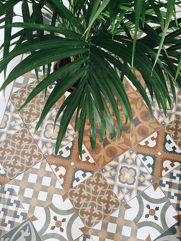 Mosaic floor and palm  by Lyuba Burakova for Stocksy United