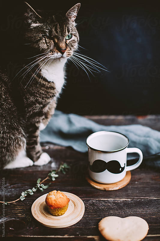 taking the breakfast with one-eyed cat by Thais Ramos Varela for Stocksy United