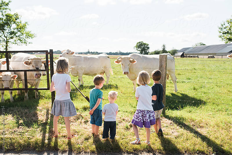 five kids looking at cows by Léa Jones for Stocksy United