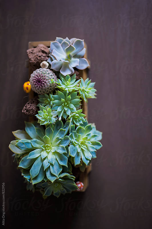 Beautiful succulent arrangement from above by Alita Ong for Stocksy United