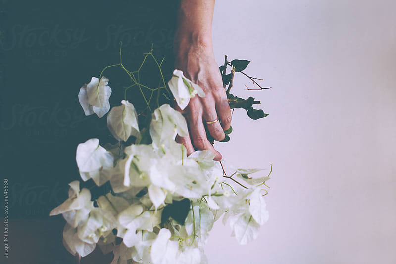 White Bougainvillaea  by Jacqui Miller for Stocksy United