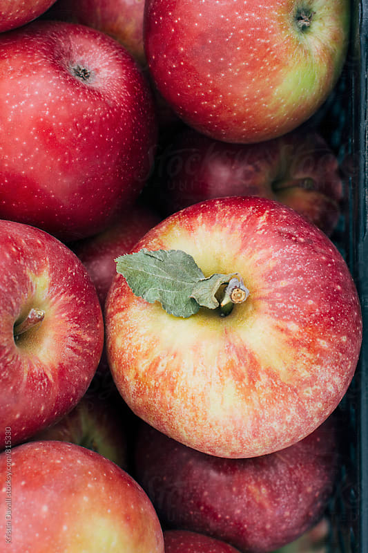 Winesap apples by Kristin Duvall for Stocksy United