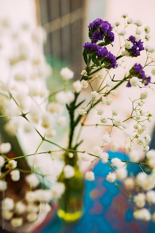 Beautiful flower indoors by Maja Topcagic for Stocksy United