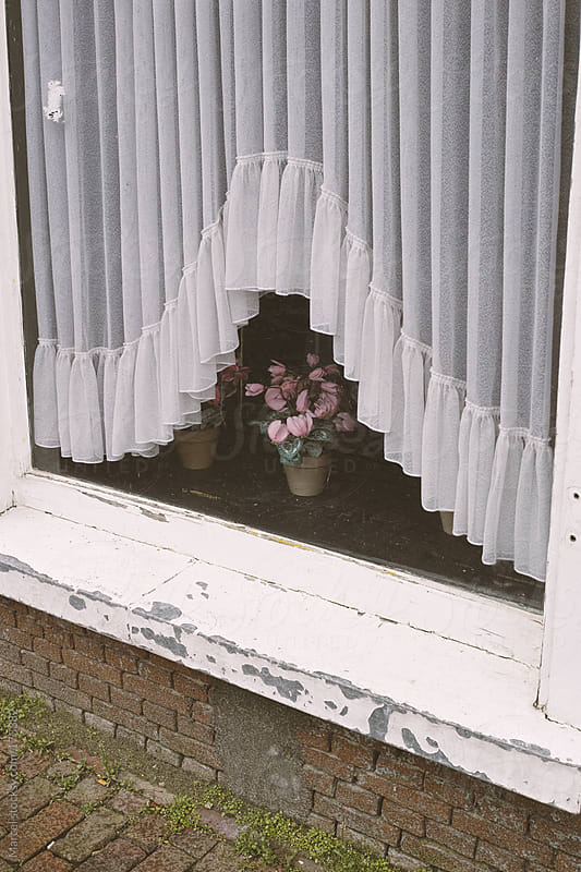 Fake cyclamen plant in the window of an old house by Marcel for Stocksy United