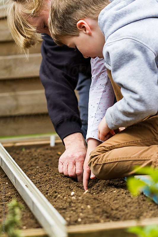 Children and grandfather plant onion crop in vegetable patch by Kirsty Begg for Stocksy United