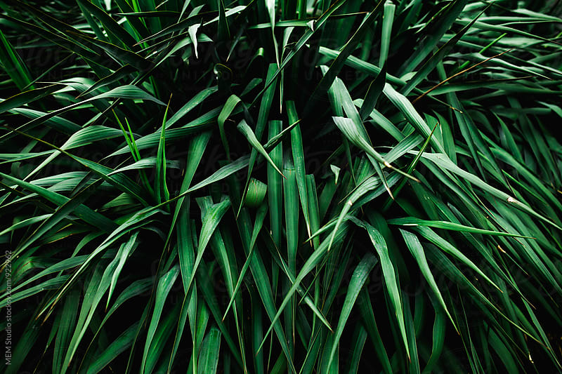 Palm bushes by MEM Studio for Stocksy United