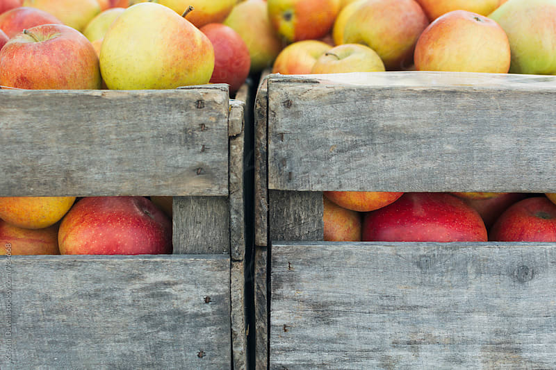 Fresh apples in crates at market by Kristin Duvall for Stocksy United