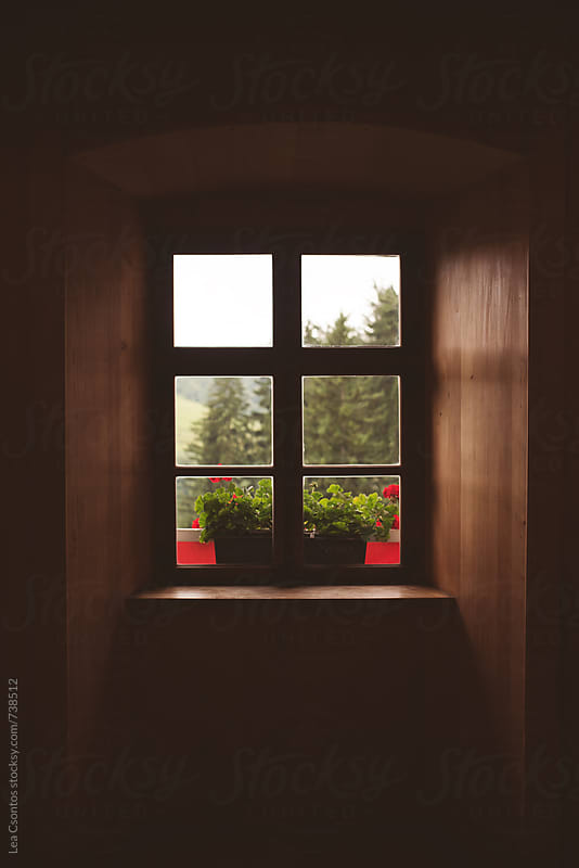 Dark room with an old window looking at trees and flowers on the sill by Lea Csontos for Stocksy United