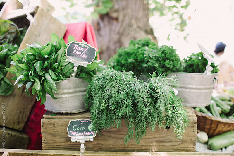 organic herbs on display at the farmer's market by Joe+Kathrina for Stocksy United