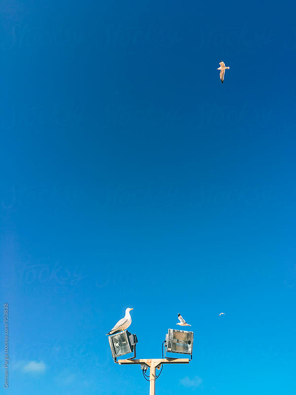 Seagull perched on top of a light pole, by German Parga for Stocksy United
