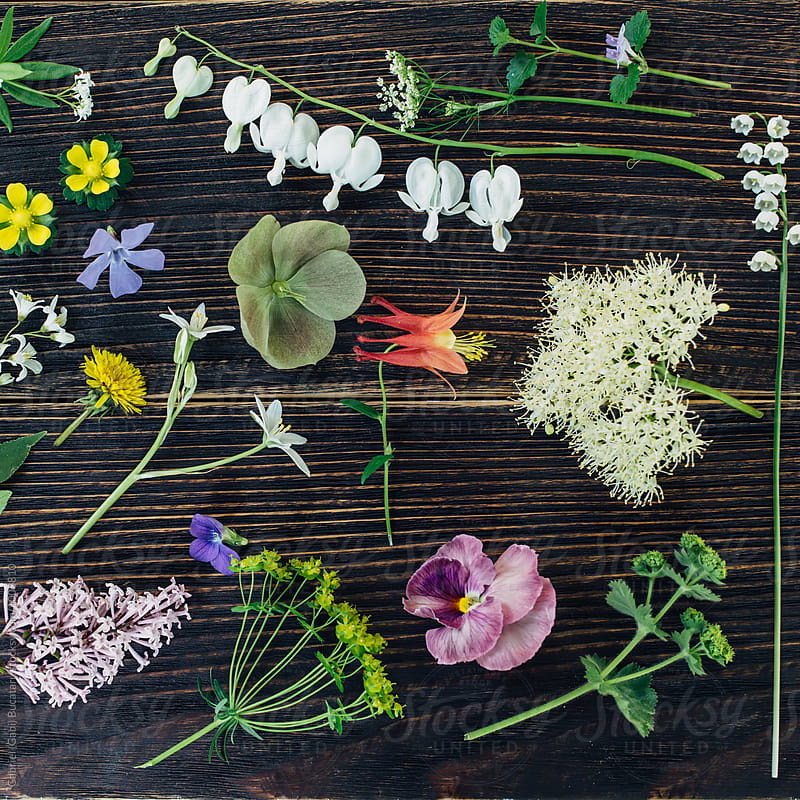 Various wild flowers by Gabriel (Gabi) Bucataru for Stocksy United