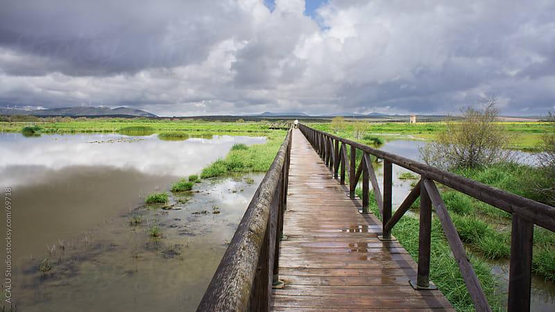 Wooden footbridge over a Fuente de piedra lagoon by ACALU Studio for Stocksy United
