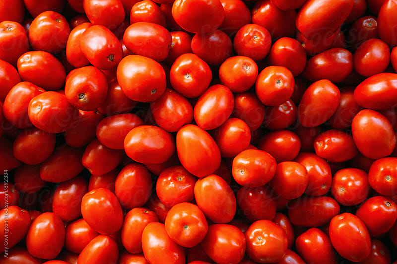 Roma tomatoes by Amy Covington for Stocksy United