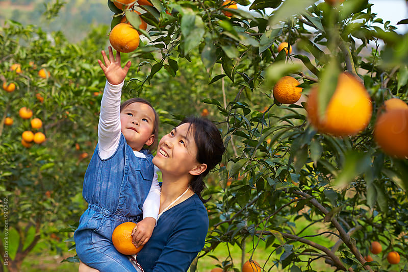 happy little asian girl with her mother in the orange farm by Bo Bo for Stocksy United