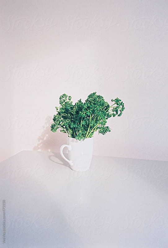 Parsley in a white cup in front of a white wall by VeaVea for Stocksy United