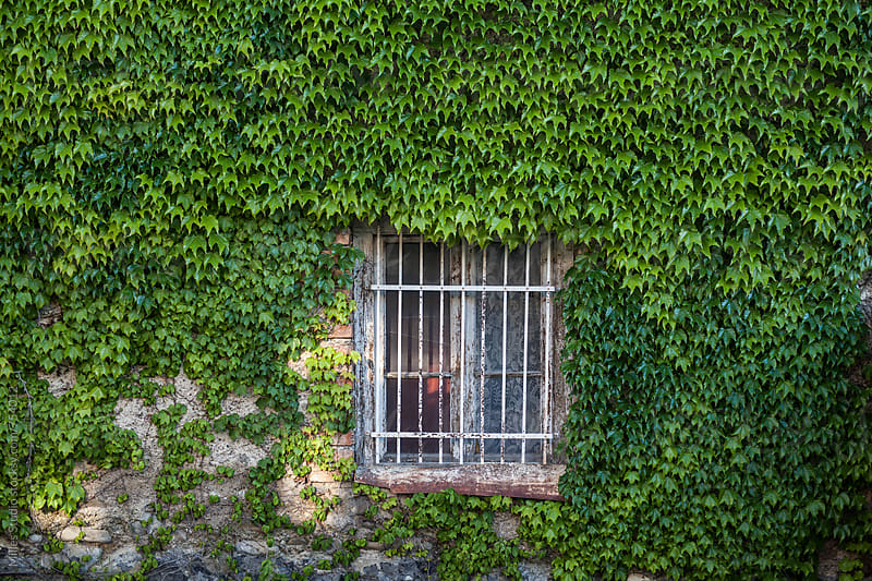 Overgrown facade by Milles Studio for Stocksy United