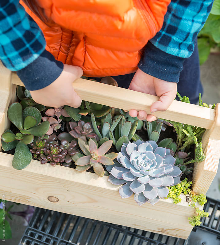 Kid's hands holding wooden flower bed with succulent plants by Lawren Lu for Stocksy United