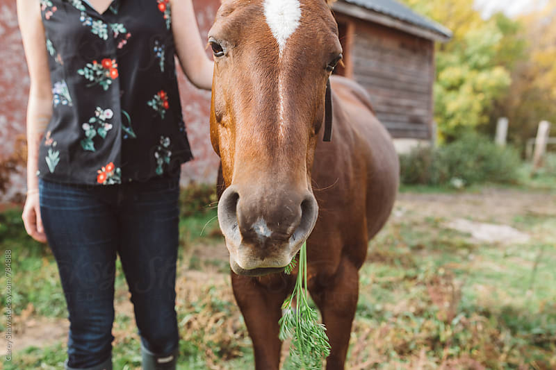 Woman standing beside pony eating a carrot by Carey Shaw for Stocksy United