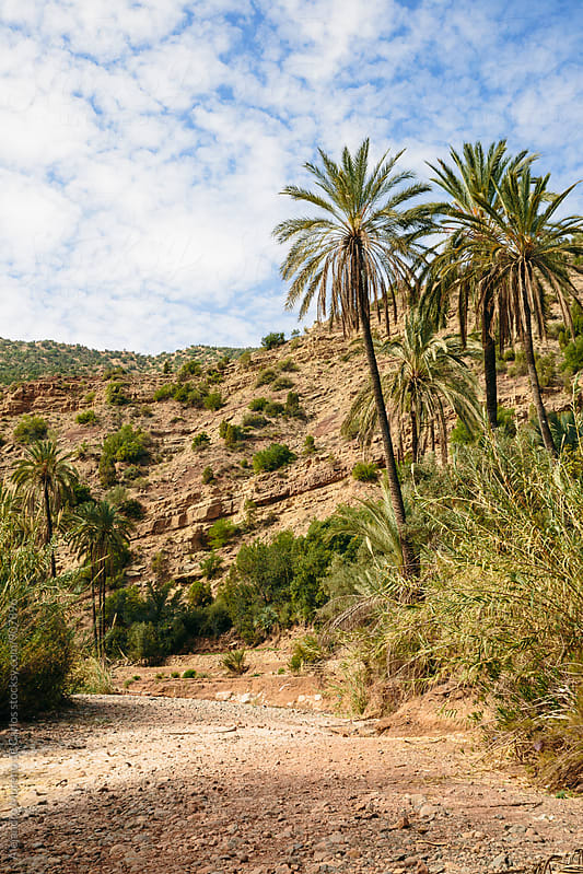 Palm trees on a dry riverbed in desertic mountain landscape in Paradise Valley, Morocco by Alejandro Moreno de Carlos for Stocksy United