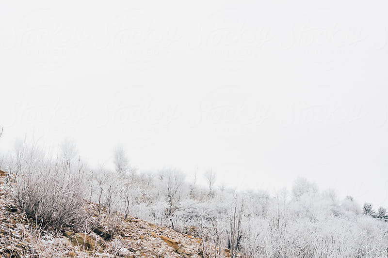 Frost covered mountaintop. West Virginia. by Kristin Duvall for Stocksy United