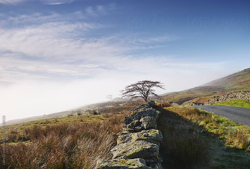Tree and rising cloud. Cumbria, UK. by Liam Grant for Stocksy United