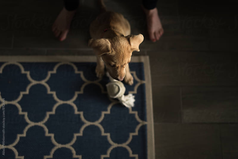A Puppy Sitting At Her Master's Feet by Alison Winterroth for Stocksy United