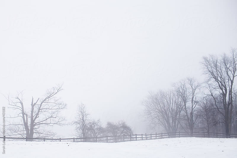 Thick fog in a rural landscape in the winter by Sarah Lalone for Stocksy United