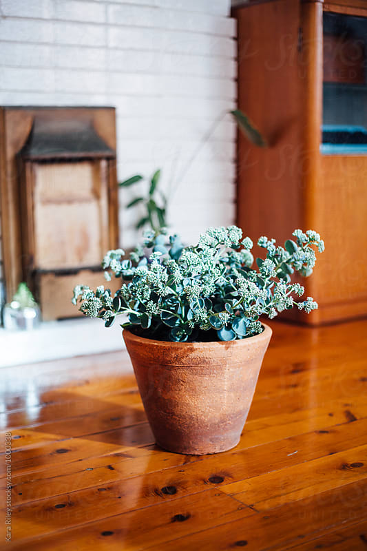 Succulent Plant in apartment by Kara Riley for Stocksy United