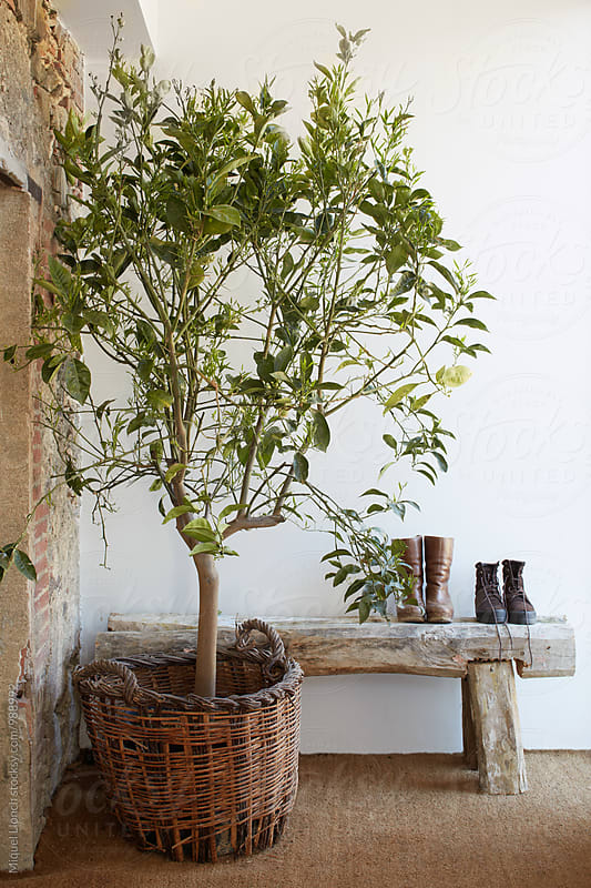 Entrance decorated with big plant and wooden bench in a country house by Miquel Llonch for Stocksy United