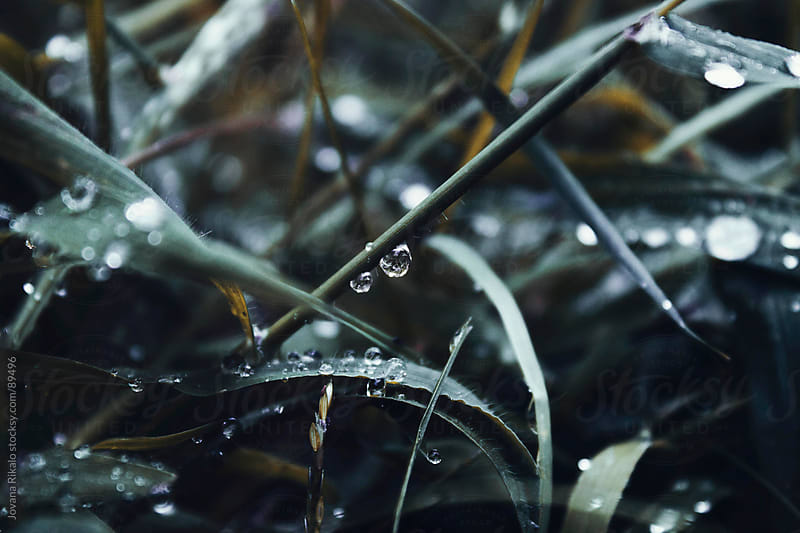 Morning dew on the grass by Jovana Rikalo for Stocksy United