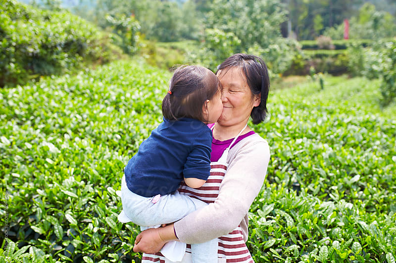 lovely little asian girl with her grandmother in the tea plantation by cuiyan Liu for Stocksy United
