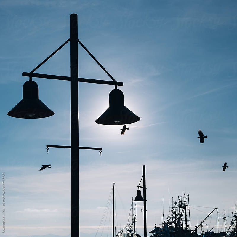 Silhouettes of street lamps, birds, and masts against the dusk sky by Lawrence del Mundo for Stocksy United