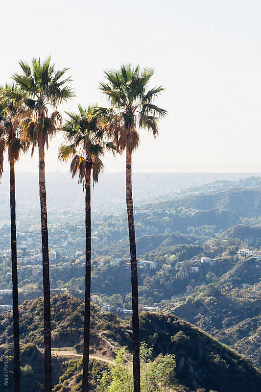 Palm Trees over LA by Anjali Pinto for Stocksy United