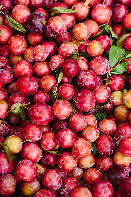 plums at the greenmarket by Christine Han for Stocksy United