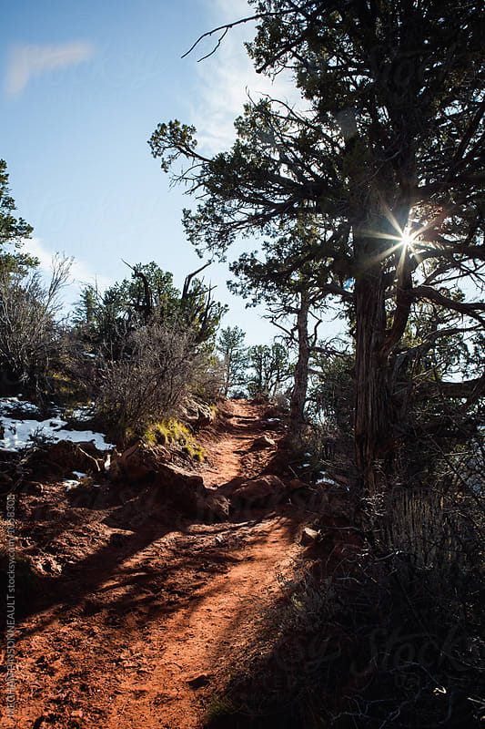 Sun Peeks through Trees on Red Stone Hiking Trail  by Meg Pinsonneault for Stocksy United