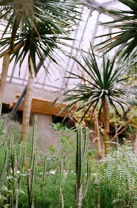 Succulents in a glasshouse by Liubov Burakova for Stocksy United