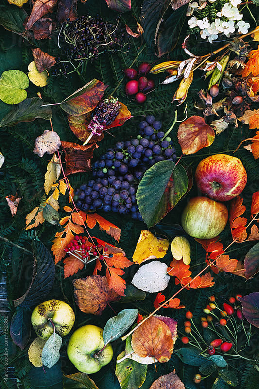 Autumn still life with garden fruits by Marcel for Stocksy United