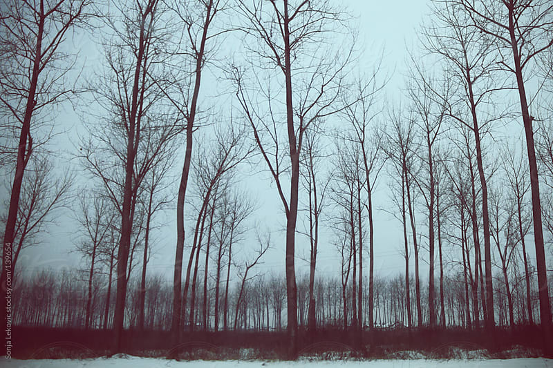 winter forest by Sonja Lekovic for Stocksy United