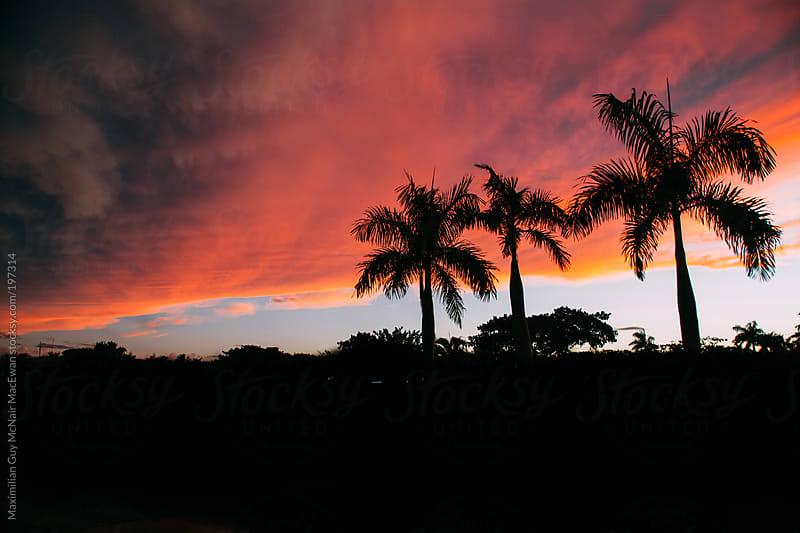 A tropical sky by Maximilian Guy McNair MacEwan for Stocksy United