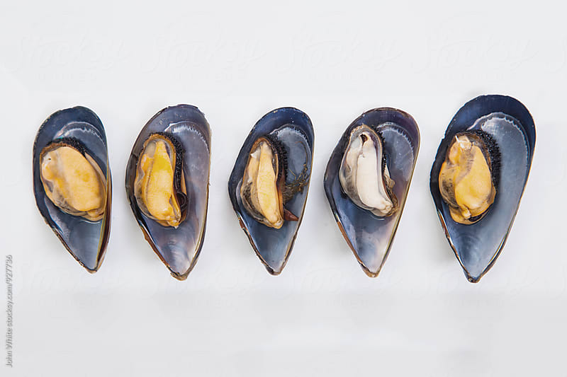 Five mussels on a white plate. by John White for Stocksy United