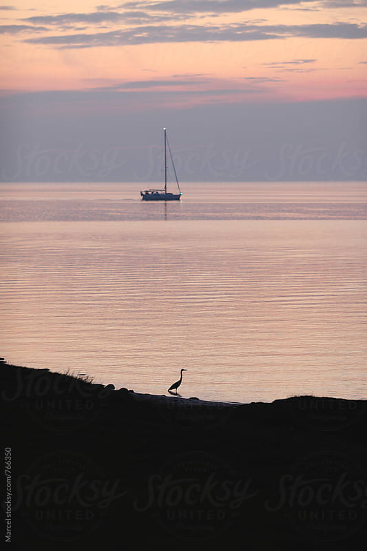 Silhouetted heron and sailing boat at sunset by Marcel for Stocksy United