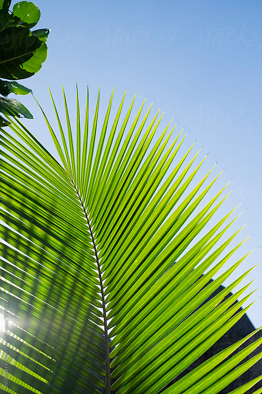 Palm leaf against the blue sky by michela ravasio for Stocksy United
