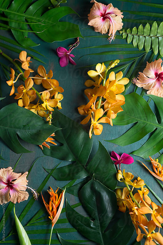 Tropical flowers on green by Alita Ong for Stocksy United