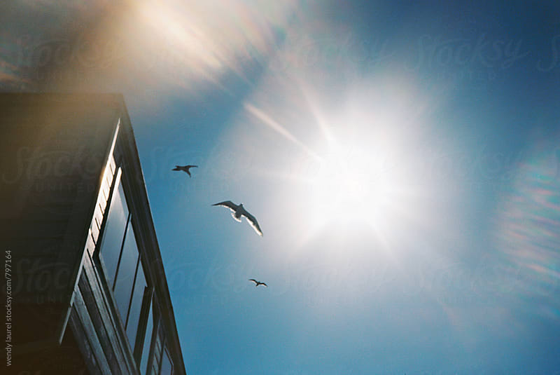sea gulls birds in blue sky with sun and sunflare in city by wendy laurel for Stocksy United