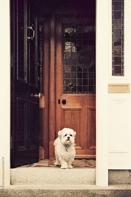 Lhasa apso standing in the doorway by Ruth Black for Stocksy United