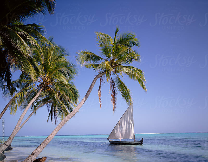 Sail boat by palm trees. The Maldives.  by Hugh Sitton for Stocksy United