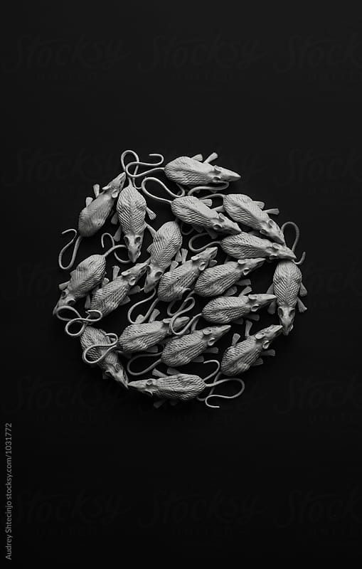 White rats/mouses on black background/toy replica by Audrey Shtecinjo for Stocksy United