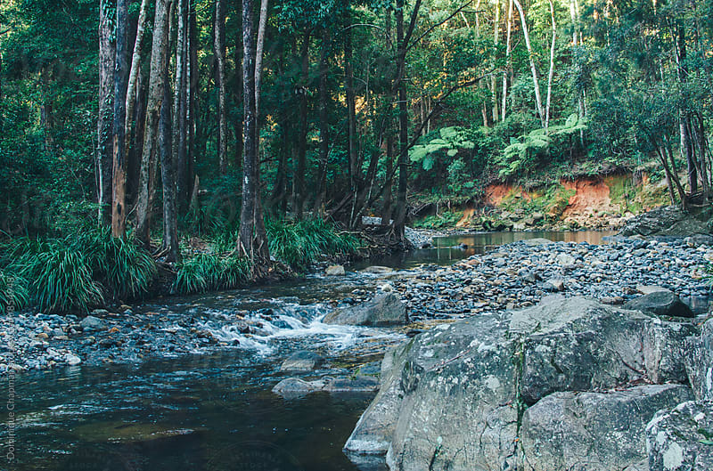 River in the middle of a forest by Dominique Chapman for Stocksy United